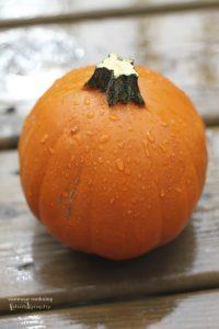 pumpkin-7903